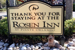 rosen inn sign with dog